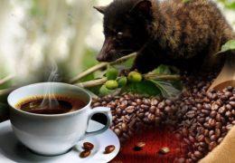 Najskuplja kafa na svetu – koja je i gde se pravi?