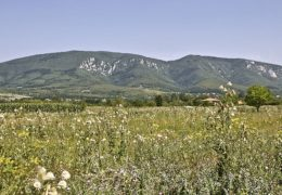 Homoljske planine - smeštaj, zanimljivosti i info